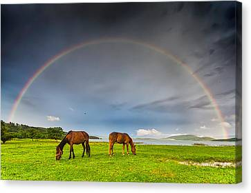 Rainbow Horses Canvas Print by Evgeni Dinev