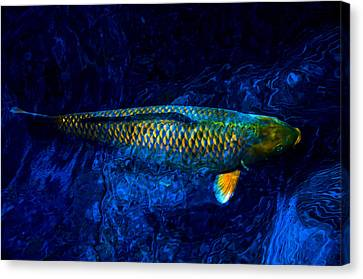 Rar Fish Canvas Print