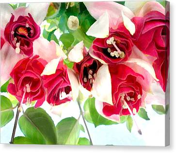 Red And White Fuschias Canvas Print by Elaine Plesser