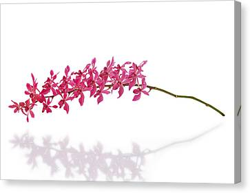 Healthy-lifestyle Canvas Print - Red Orchid by Atiketta Sangasaeng