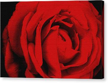 Red Rose Canvas Print by Robert Kernodle