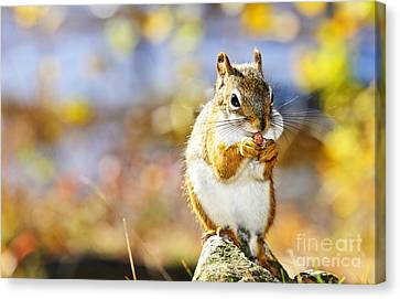 Red Squirrel Canvas Print by Elena Elisseeva