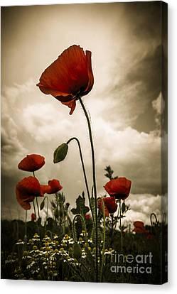 Red Weed Canvas Print by Martin Dzurjanik