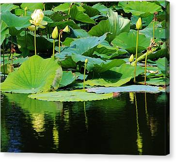 Reflecting Waters Canvas Print by Bruce Bley