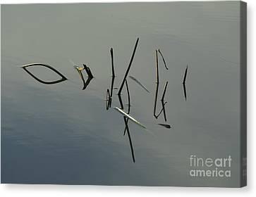 Reflection Canvas Print by Odon Czintos