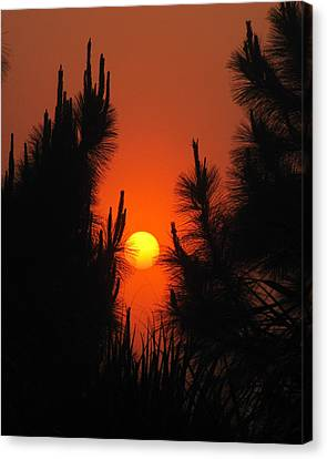 Rise And Pine Canvas Print by Peg Urban