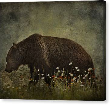 Roaming Daisies  Canvas Print by Empty Wall