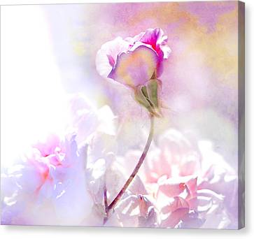 Rose By Any Other Name Canvas Print by Jeff Burgess