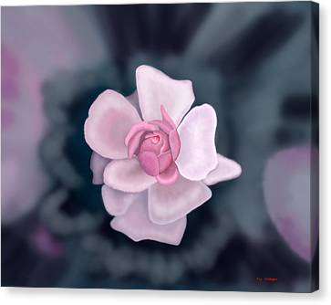 Rose Canvas Print by Tim Stringer