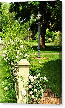 Roses Canvas Print by HD Connelly