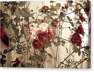 Roses  Canvas Print by Robert Hellstrom