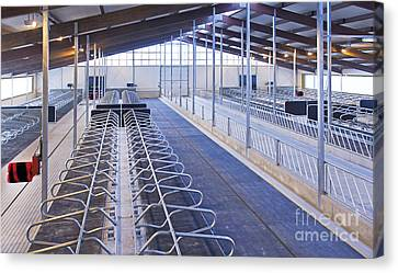 Row Of Cattle Cubicles Canvas Print