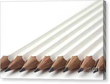 Row Of White Pencils Canvas Print by Blink Images