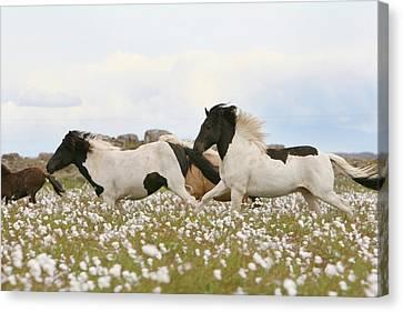 Wild Horse Canvas Print - Running Horses by Gigja Einarsdottir