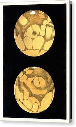 Schiaparelli's Mars, Historical Artwork Canvas Print