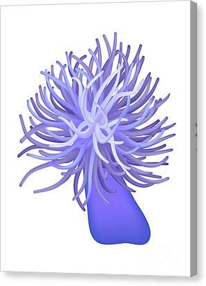 Sea Anemone Canvas Print by Michal Boubin