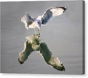 Sea Gull Reflection Canvas Print by Paulette Thomas