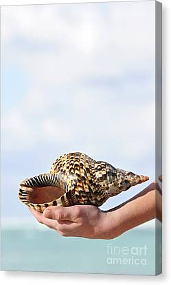 Seashell In Hand Canvas Print by Elena Elisseeva