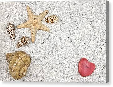 Seastar And Shells Canvas Print by Joana Kruse