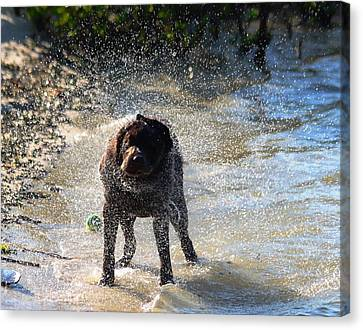 Canvas Print featuring the photograph Shake Shake Shake by Jeanne Andrews
