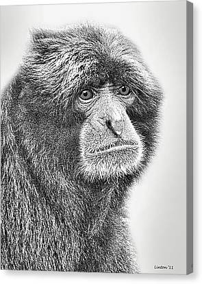Siamang Canvas Print by Larry Linton