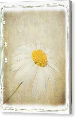 Simple Daisy Canvas Print by Julie Williams