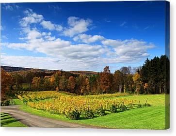Six Miles Creek Vineyard Canvas Print