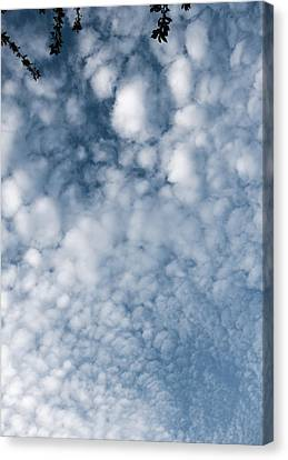 Canvas Print featuring the photograph Sky Fluff by Lenny Carter