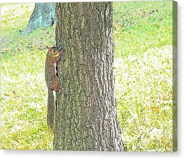 Smiling Squirrel Canvas Print by Joseph Hendrix