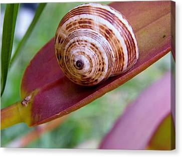 Canvas Print featuring the photograph Snail On Leaf by Werner Lehmann