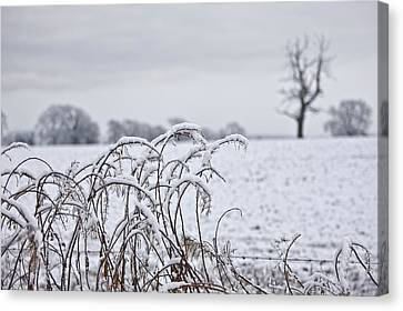 Snow Covered Trees And Field Canvas Print by John Short