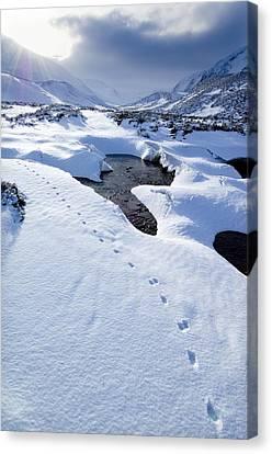 Snowy Landscape, Scotland Canvas Print