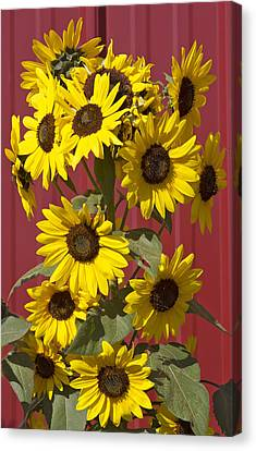 So Many Sunflowers Canvas Print