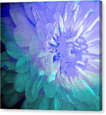 Soft Susy  Canvas Print by Empty Wall