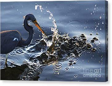 Splash Canvas Print by Bob Christopher