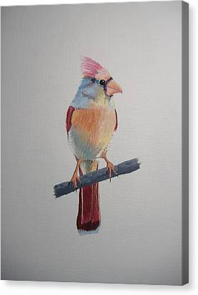 Spring Cardinal Canvas Print by Norm Starks