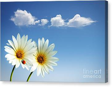 Spring Flowers Canvas Print by Carlos Caetano