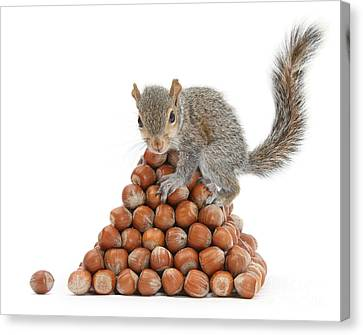 Squirrel And Nut Pyramid Canvas Print by Mark Taylor