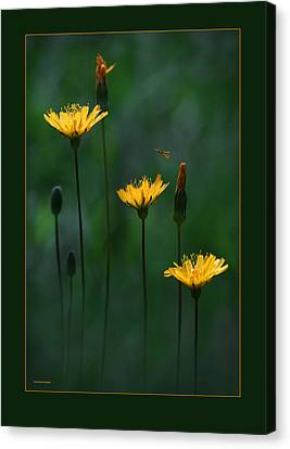Summer Dining Canvas Print by Ron Jones