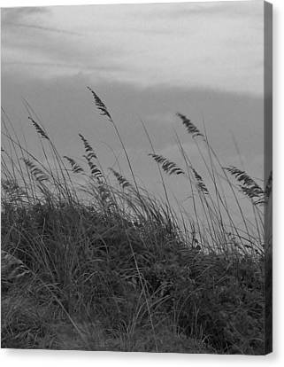 Summer Fairwell Canvas Print by Stacy Sikes