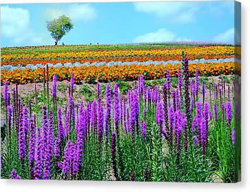 Summer In Hokkaido Canvas Print by Frank Chen