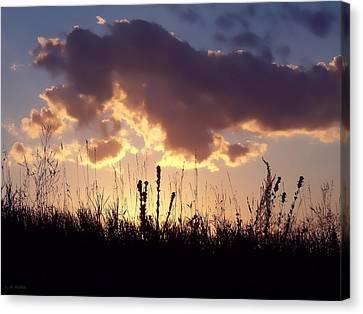 Summer Sunset Canvas Print by Lauren Radke