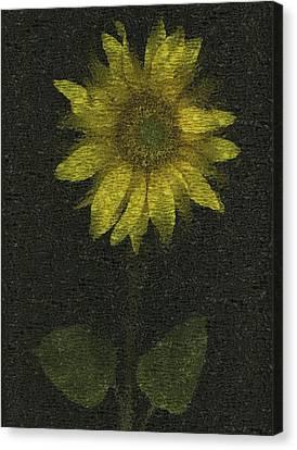 Sunflower Canvas Print by Deddeda