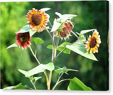 Sunflower Power Canvas Print by Bill Cannon