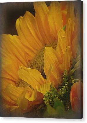 Sunflower Canvas Print by Terry Eve Tanner