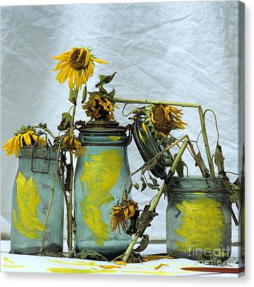 Indoor Still Life Canvas Print - Sunflowers .helianthus Annuus by Bernard Jaubert
