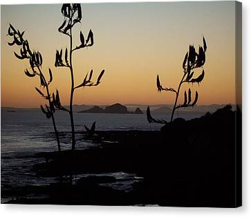 Canvas Print featuring the photograph Sunrise On East Coast Of North Island 1 by Peter Mooyman