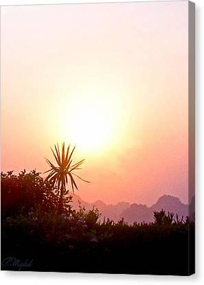 Sunset Canvas Print by Amr Miqdadi