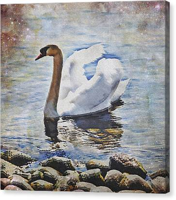Swan Canvas Print by Joana Kruse