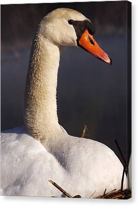 Canvas Print featuring the photograph Swan Lake 1 by Gerald Strine